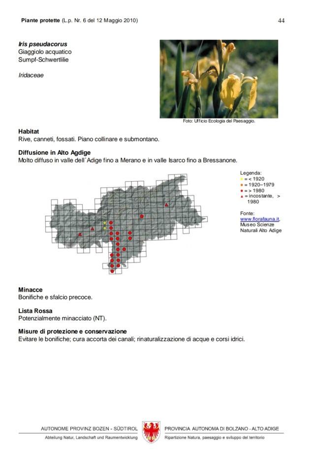 Scheda Iris pseudacorus